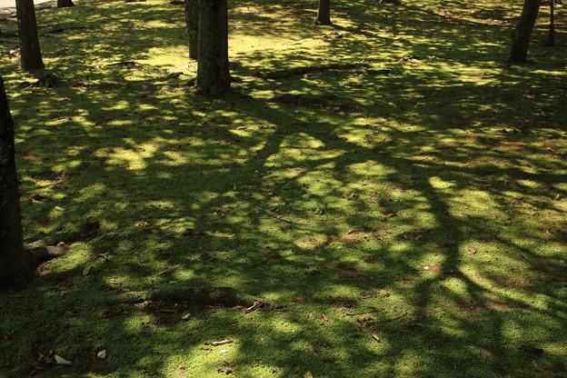 写真: 夏の木陰