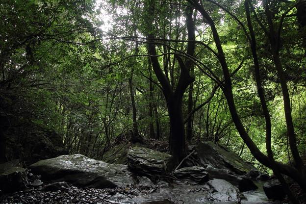 写真: 緑の森林