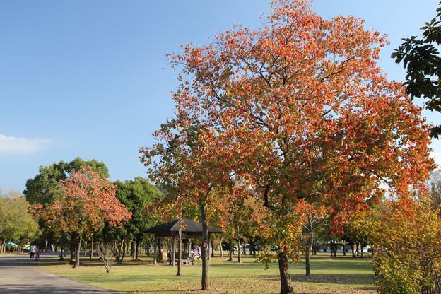 秋のエコパーク