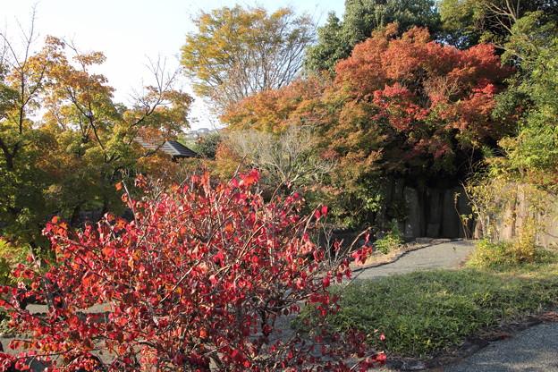 竹林園の秋