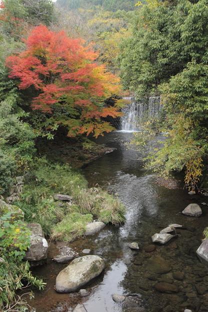 湯出神社近くの紅葉