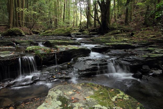 秋の渓流・・水も少なく落ち葉しかないけど