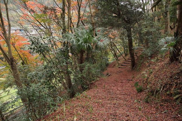 落ち葉の参道