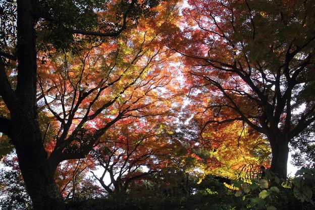 城山の紅葉・・手前は緑が残る