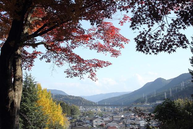 城山の紅葉