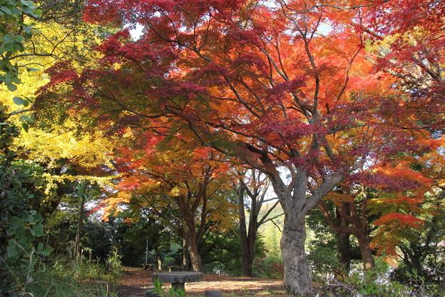 城山の紅葉・・まだまだ緑が残る