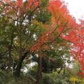 城山の紅葉・・まだ緑が残る