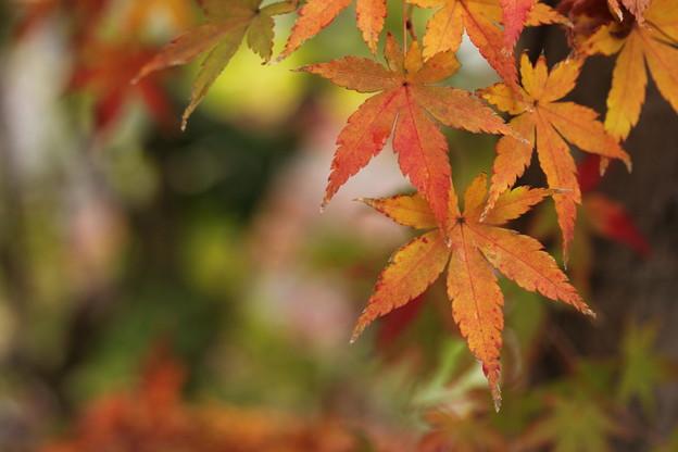 今年は葉っぱが台風でだめ