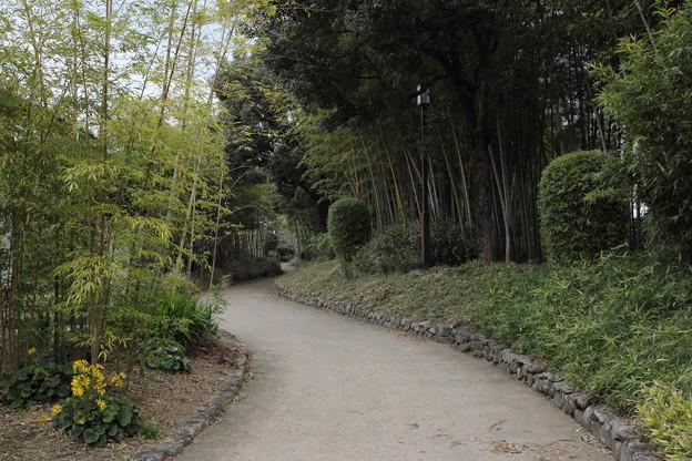 寒くて竹林園も静か