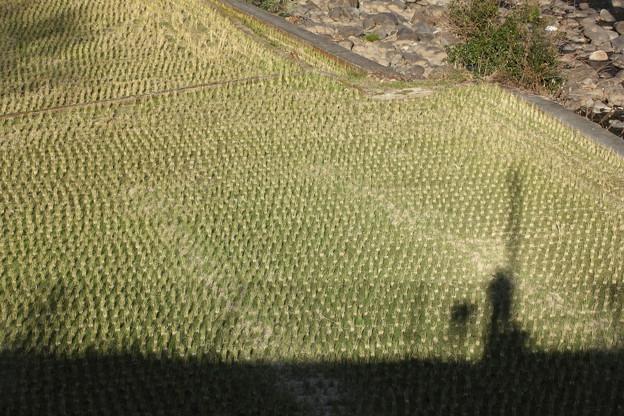 冬の田んぼと私の影