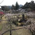 写真: 梅林園・・水俣古城
