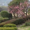竹林園の梅
