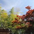 春紅葉・・竹林園