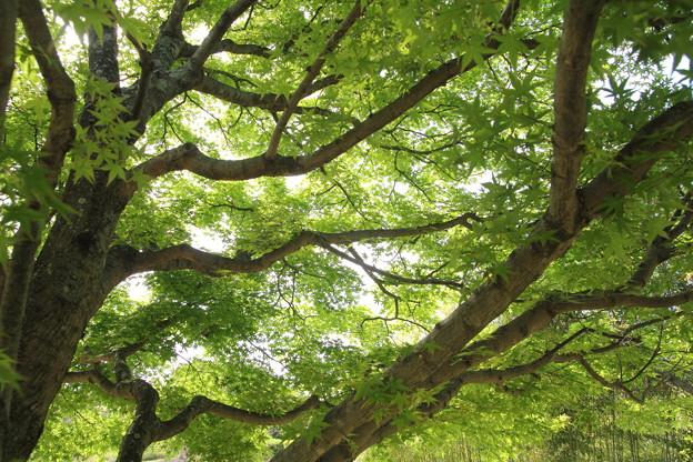 紅葉新緑・・竹林園