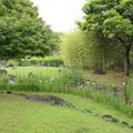以前より少ない花菖蒲・・竹林園