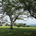 Photos: 木陰がいい季節になりました