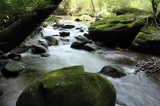 箱滝上流の渓流