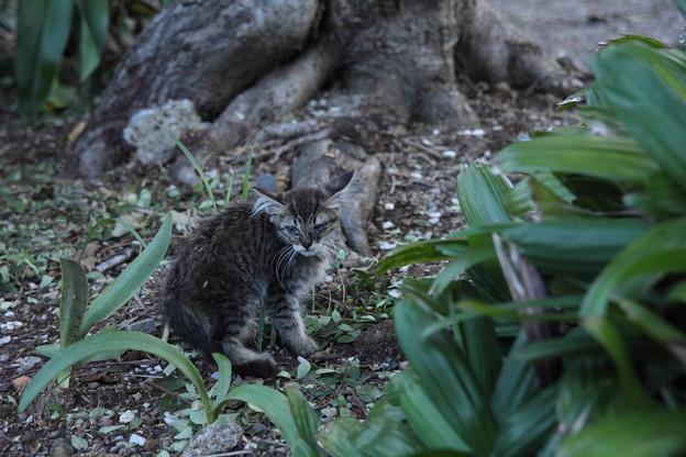 鳥居の脇にいた子猫