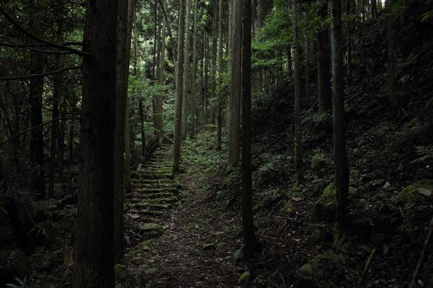 小滝への道