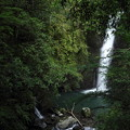 Photos: 小滝・・ますます木がじゃましてる