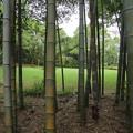 Photos: 雨の竹林園