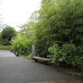 Photos: 竹林園・・今日はポケモンやってる人いません