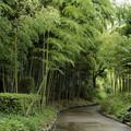Photos: 竹林園