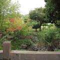 Photos: 春から紅葉