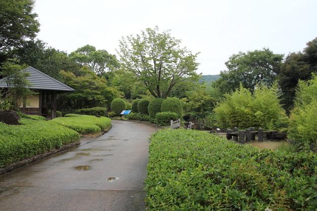 雨の竹林園