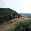 山はススキが満開・・中尾山~薄原