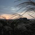 Photos: 夕日とススキ