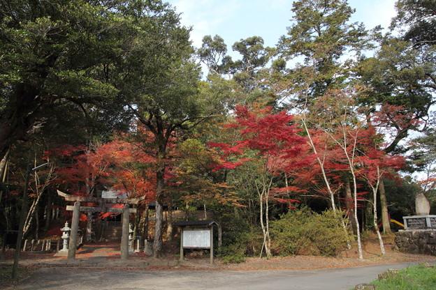 住吉神社の紅葉・・ちょっと遅め