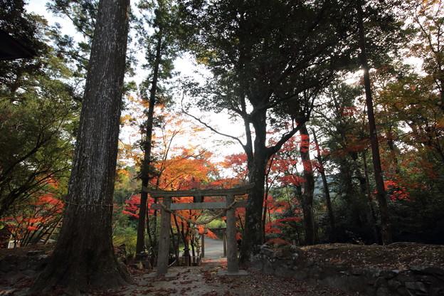 住吉神社・・境内から