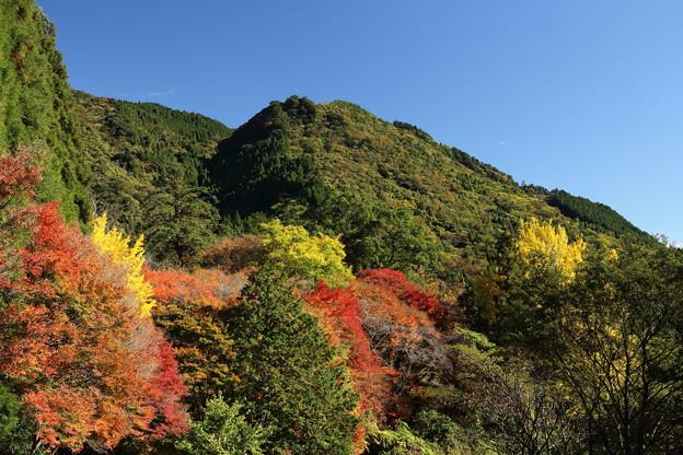 湯出神社の紅葉・・南側