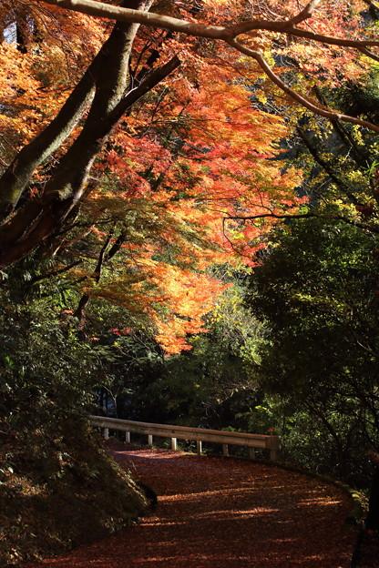 湯出神社の紅葉・・午前中の雨で葉が散っている