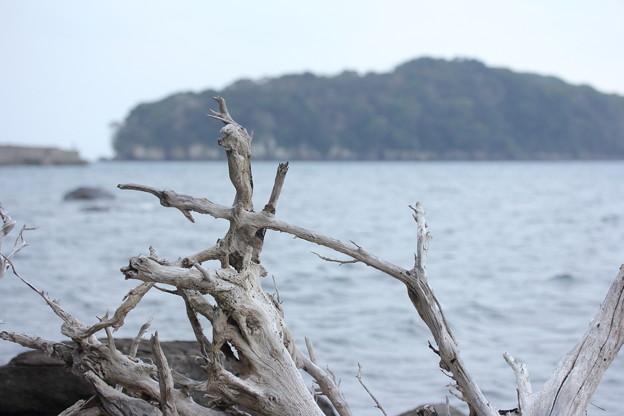 Photos: 漂流木
