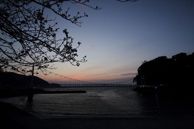 湯の児観月橋と桜