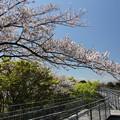 中尾山公園の桜・・スカイロード