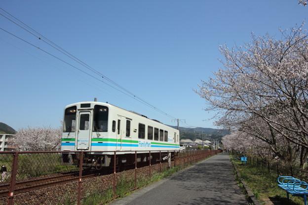 おれんじ鉄道と桜