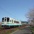 Photos: おれんじ鉄道と桜