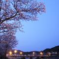 夜桜・・浜グランド