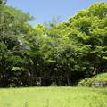 Photos: もみじの新緑・・湯出神社