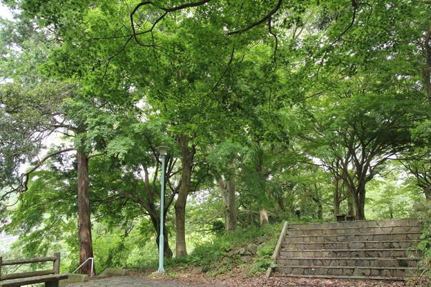 城山のもみじ新緑
