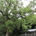 Photos: 阿蘇神社