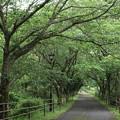 Photos: 遊歩道新緑
