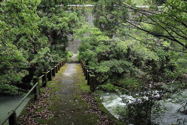 遊歩道から川へ少し下る脇道