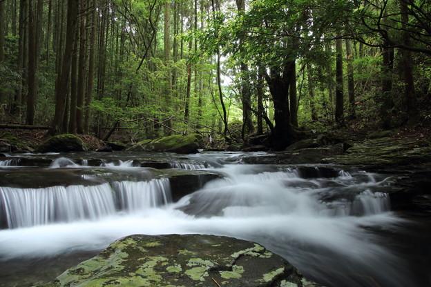 箱滝上流の流れ