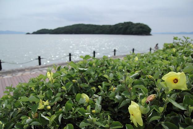 浜朴咲く親水護岸
