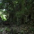 Photos: 大滝への道