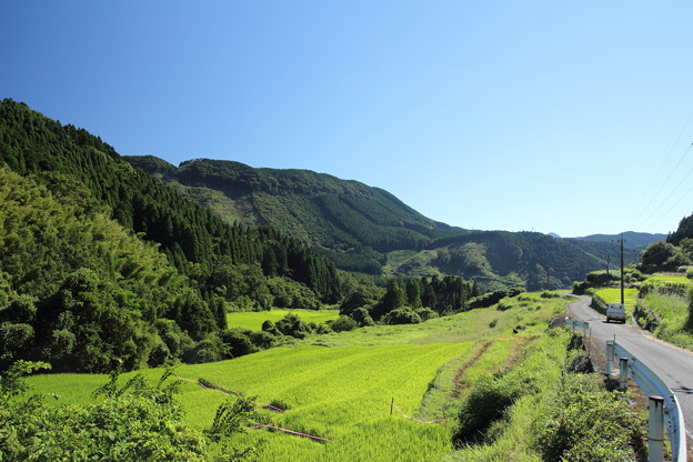 棚田の夏・・寒川